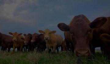 Torsten bettinger farms working professionals msw betting